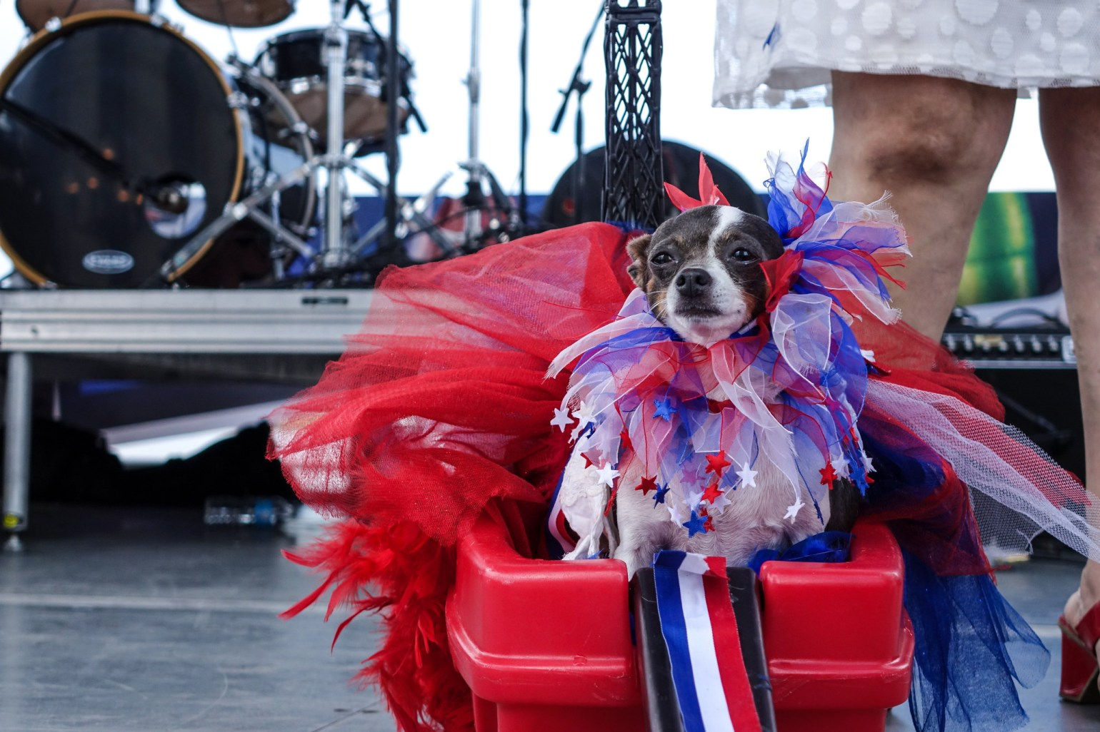 A puppy dresses in its best French attire for Bastille Day Fete. (Photo: Paul Broussard)