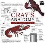 GoNOLA_infographic_031115_craysanatomy (3)