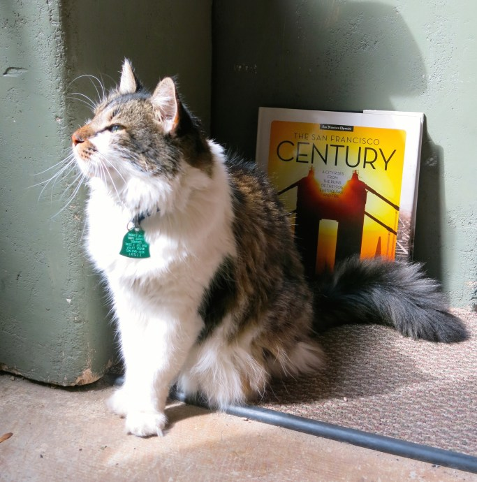 Isabelle enjoying the sun at Crescent City Books. Photo credit: Christopher Garland.