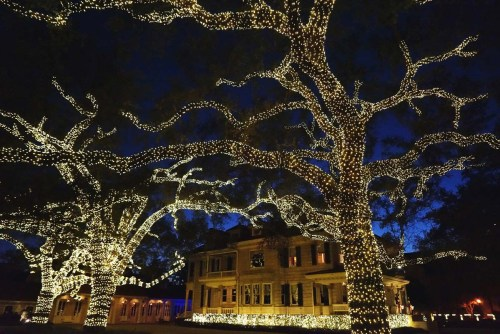 st-charles-lights-tree