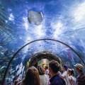 Take in the wonders at the Audubon Aquarium. (Photo: Paul Broussard)