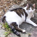 Stevies Cat