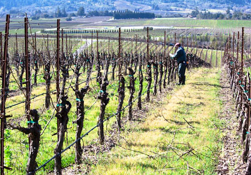 image of Frei Ranch vineyards