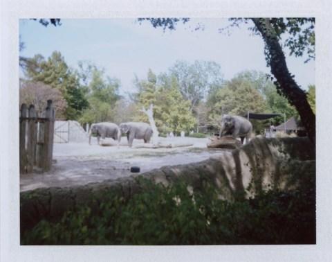 Photo: Amanda Fleetwood - Polaroid 420 Land Camera - Fuji FP-100C