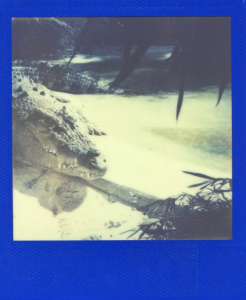 Photo: Catherine Downes - Polaroid OneStep - Impossible Project PX-680 Color Block