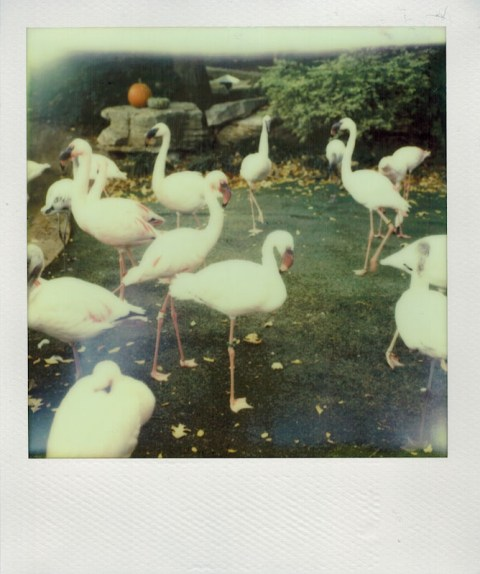 Photo: Christian Oliveira - Impossible Project PX-70 CP - Polaroid SX-70