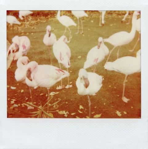 Photo: Synthia Goode - Polaroid Softtone film - Polaroid Spectra AF