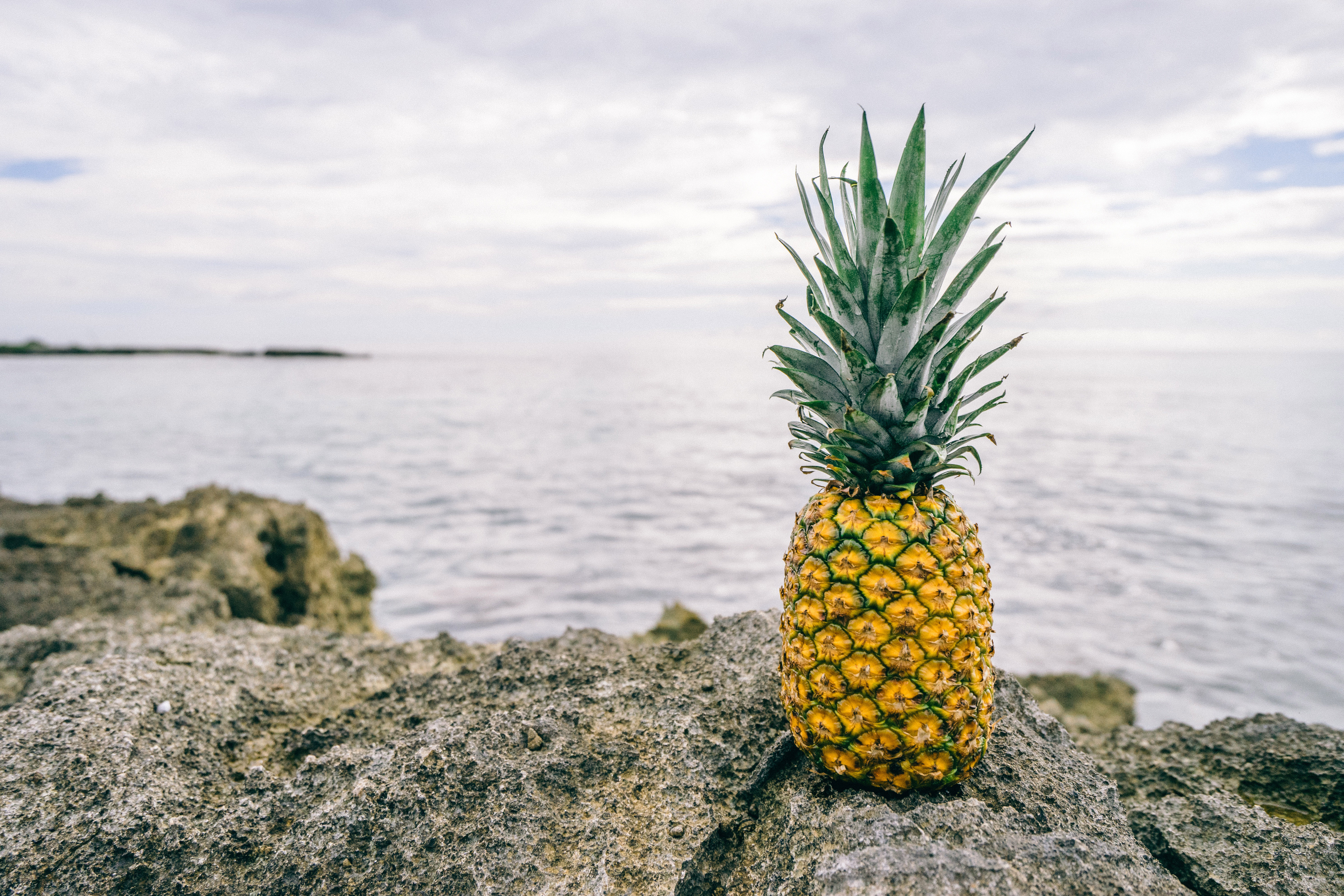 Free Photography Stock Pineapple By The Seaside Image Free Stock Photo Public Domain