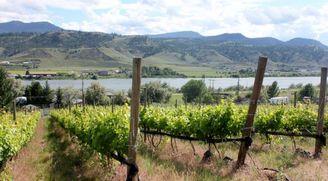 Kamloops Wine Country – Vitamin Daily