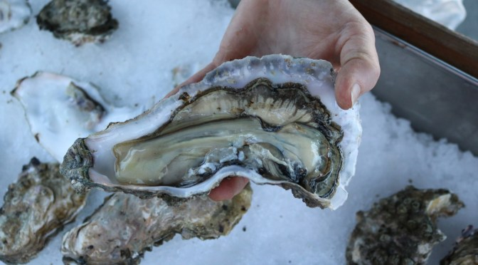 Skipper Otto's Cortes Island Oysters #UglytoAwesome