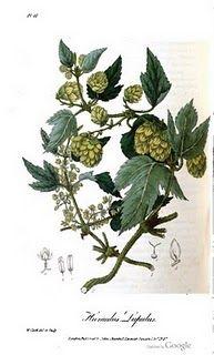 botany2