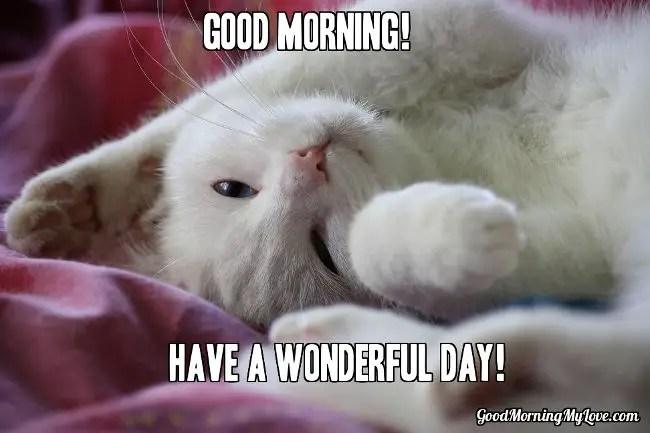 Good Morning Meme-Cat