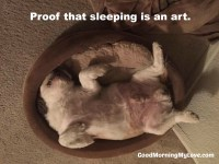 Good Morning Memes_Funny Sleeping Dog_Silly