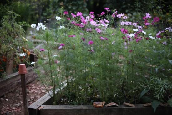 cosmo- vegetable garden - 1 (4)