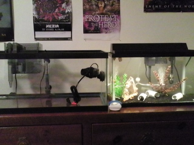10 vs 20 gallon fish tank 20 gallon long freshwater for 10 gallon koi tank