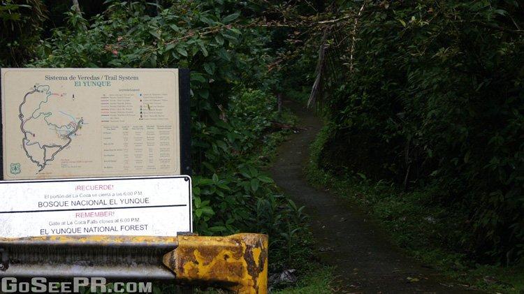 Bano de oro trail el yunque puerto rico go see pr for Bano grande puerto rico