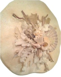 20 Photos Sand Dollar Wall Art | Wall Art Ideas
