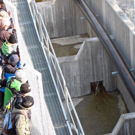 Invigning av laxtrappan