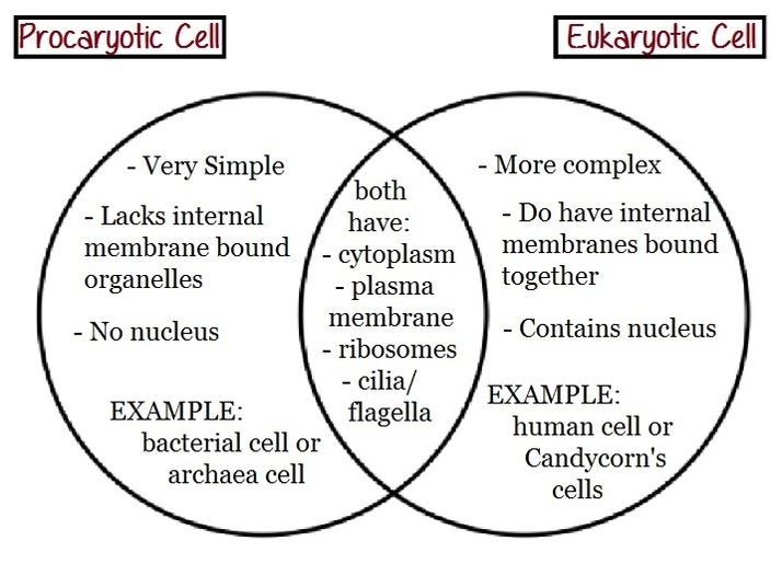 archaea vs bacteria venn diagram
