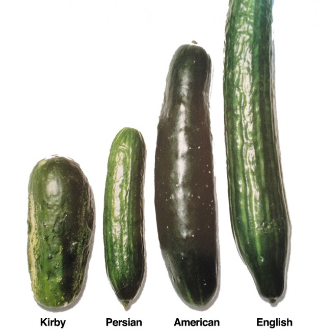 American Calendar Type Type 1 Diabetes American Diabetes Associationr Cucumbers All Types And How To Use Them Gourmet Kosher