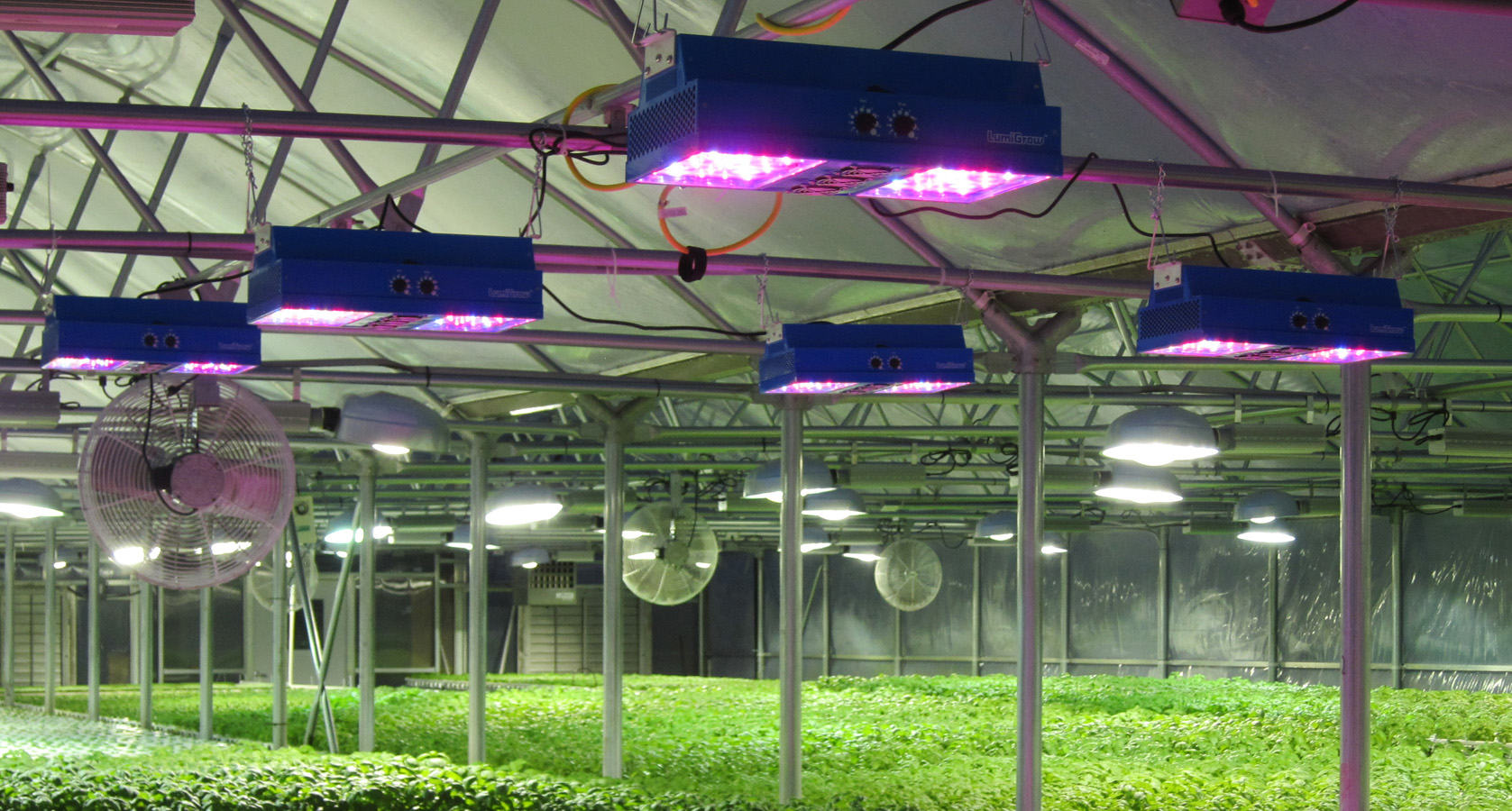 Lighting Online Msu To Offer Online Greenhouse Lighting Course Greenhouse
