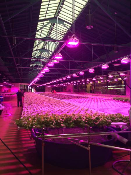 Led Culture Indoor Led Lighting And Its Effect On Plants, Growers And The