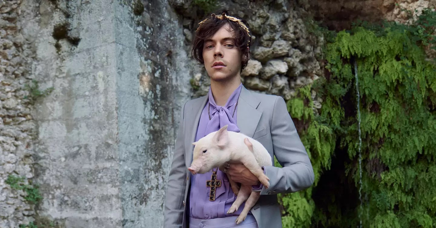 Cute Baby Pig Wallpaper Harry Styles Stars In Second Gucci Campaign For Gucci