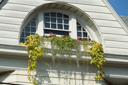 Arched Window with Flowers