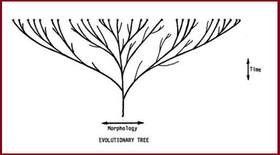 morphology tree diagrams