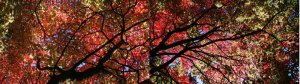 Autumn Tree   Digital collage   2008