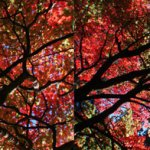 Autumn Tree | Digital collage | 2008