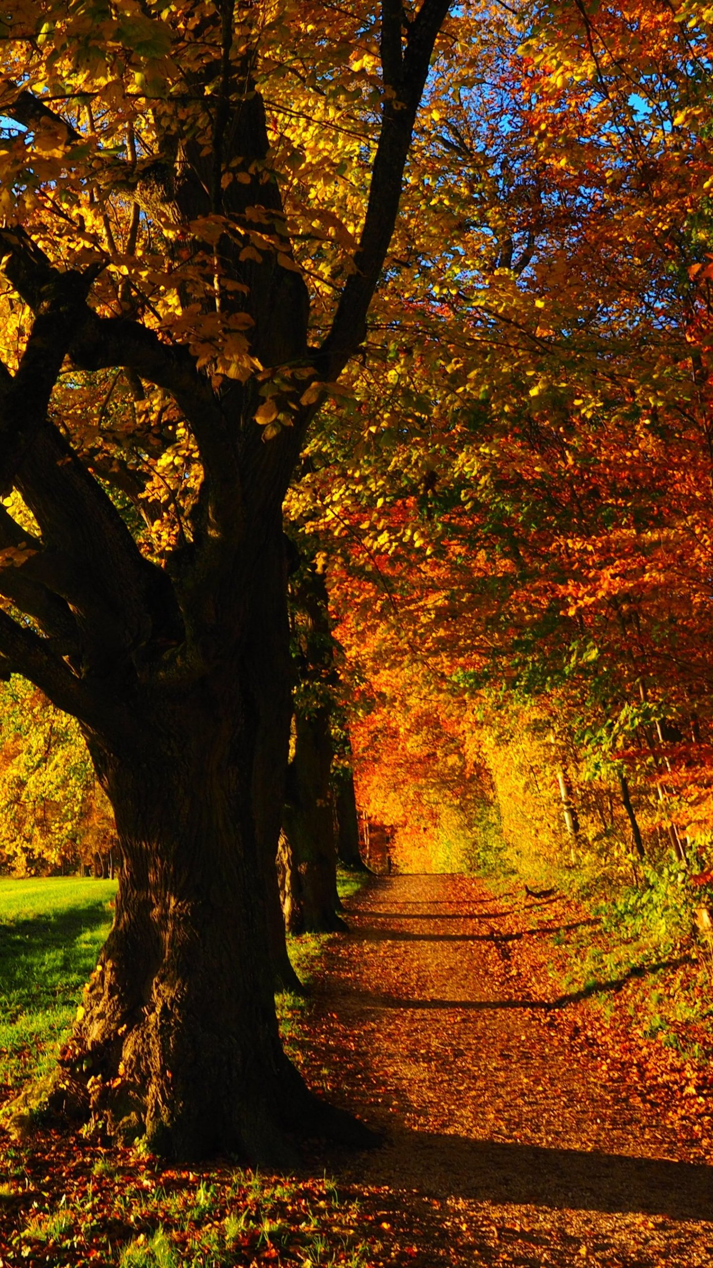 Fall Android Wallpaper Fall Forest Wallpaper Iphone Android Desktop Backgrounds