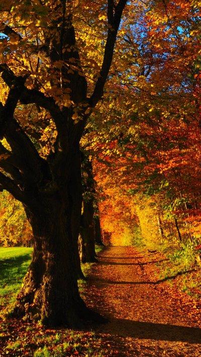 Fall Forest Wallpaper - Mobile & Desktop Background