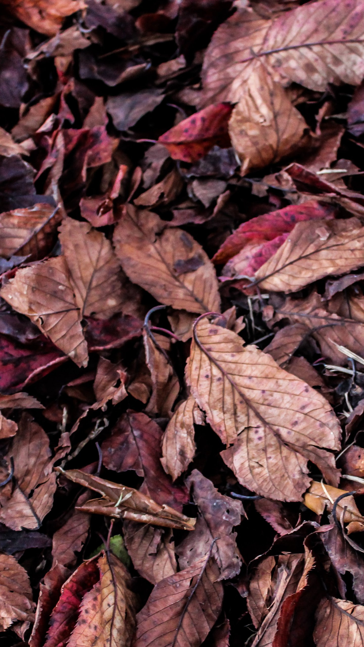 Fall Android Wallpaper Fall Leaves On Ground Texture Wallpaper Iphone Android