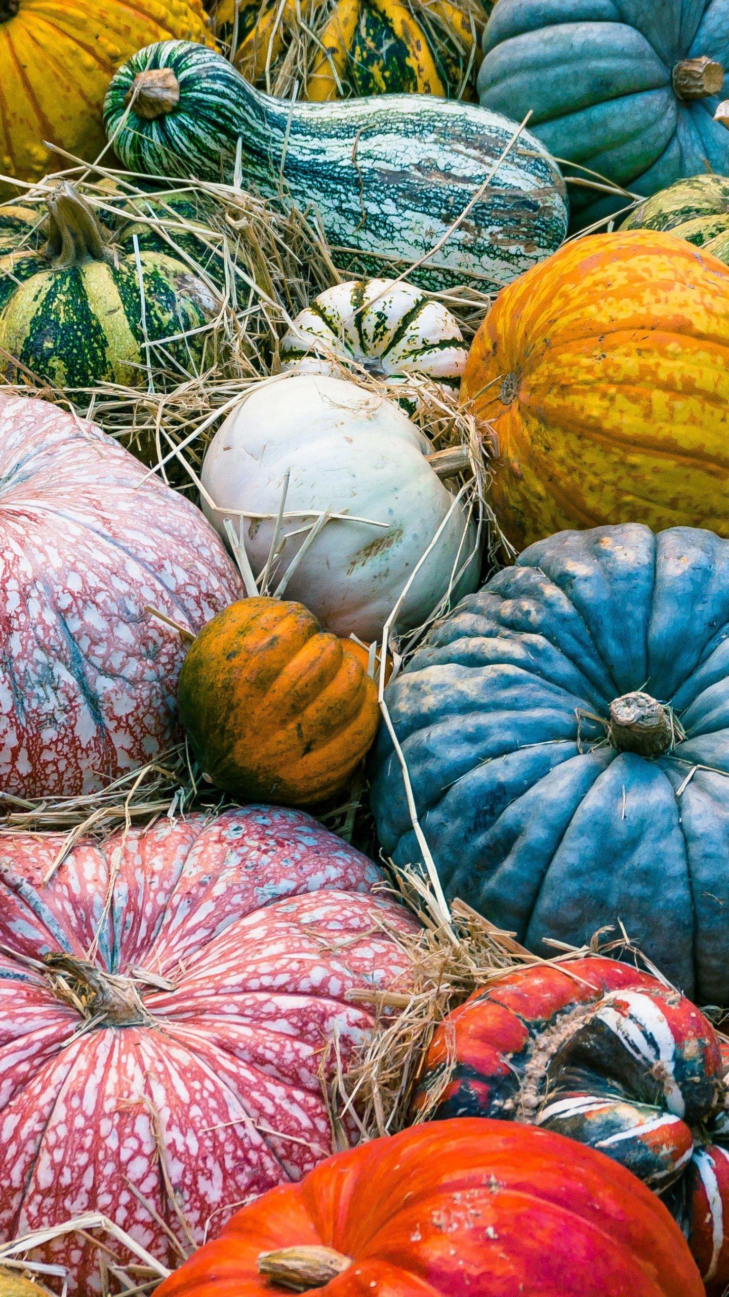 Fall Wallpaper For Android Tablet Colorful Pumpkins Autumn Wallpaper Mobile Amp Desktop