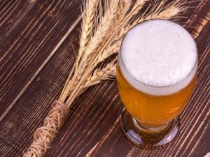Benefits of Malt  Beverages
