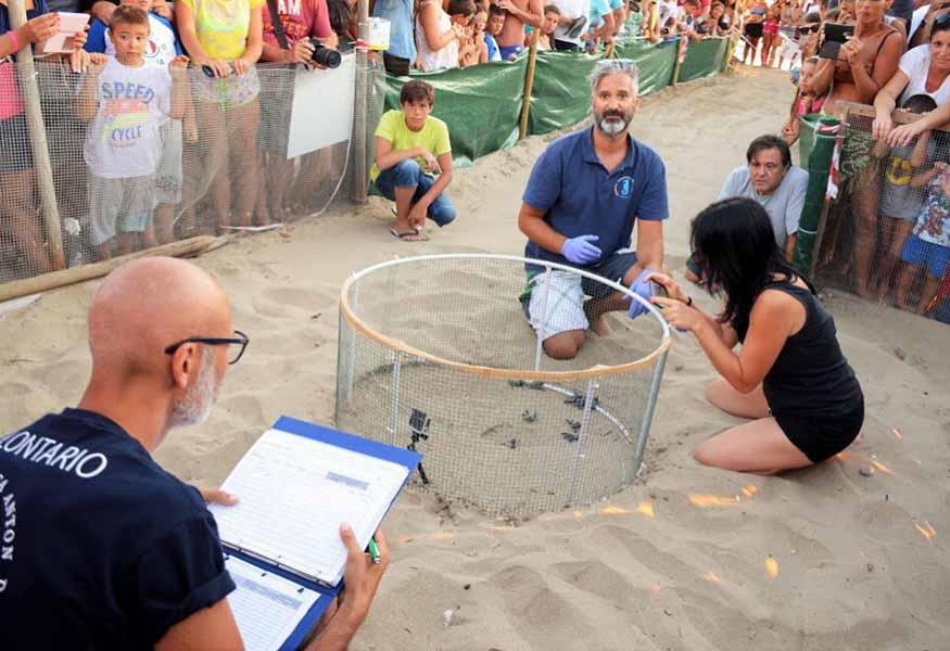 Cilento nate 26 tartarughe sulla spiaggia di Acciaroli (Pollica - SA)