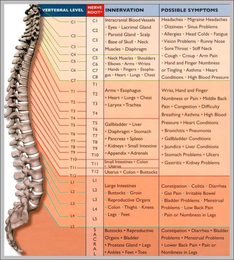 nervous system Graph Diagram