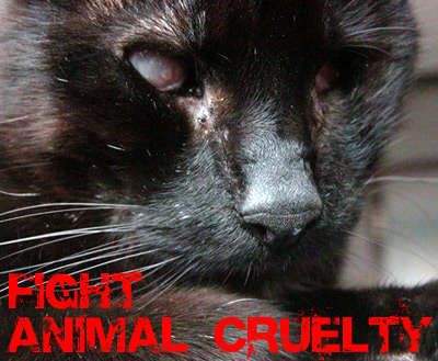 Fight Animal Cruelty