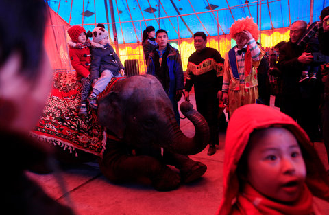 An elephant kneeling as children take turns sitting on it at a circus in Beijing.
