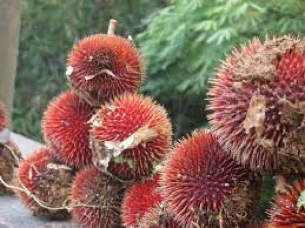 Image source: Year of the Durian