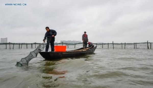 Fishermen harvest hairy crabs from Yangcheng Lake with their collapsible net traps. Image source: Xinhua