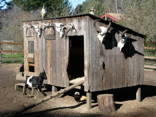 goatie shack snuggle