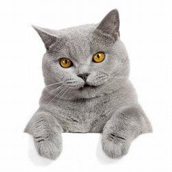 63679-250x249-Sassy_cat