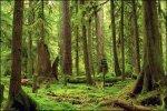 Forks Washington Twilight Forest