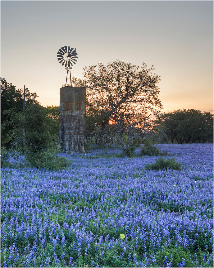 Fall Time In Grape Fields Wallpaper Day Trip To Fredericksburg Texas Our Great American