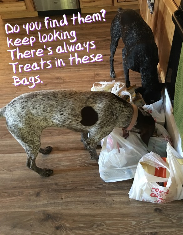 GSPs looking for treats