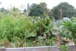 anys_garden
