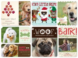 Small Of Dog Christmas Cards