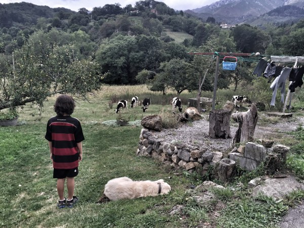 Our lovely Airbnb in Asturias, Spain - Just watching the cows